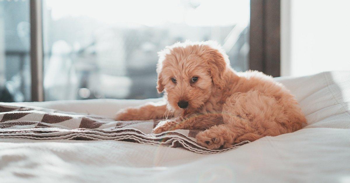 zenO Pets - dormire con il proprio animale domestico