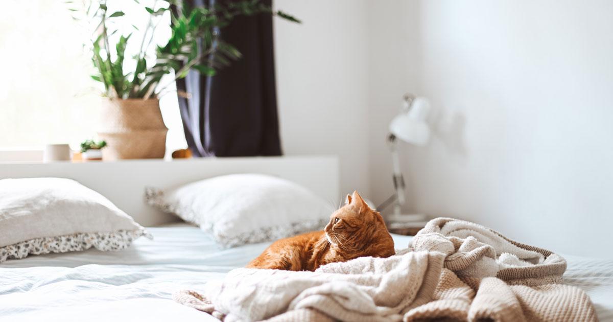 Il sonnellino pomeridiano fa bene? Via libera da ricerche e studi